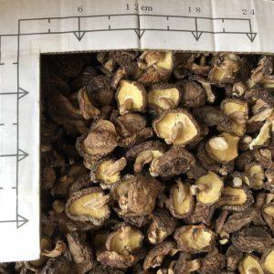 本日は、別府やまよし椎茸入札市場に。