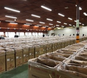 【大分県椎茸農業協同組合】9月6日入札