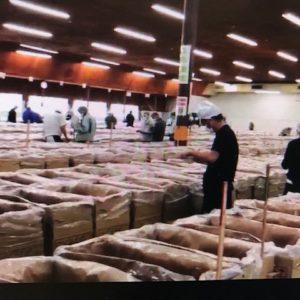 【大分県椎茸農業協同組合(OSK)入札】9月29日参加しました